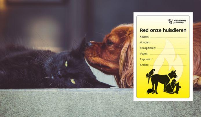 De huisdiersticker moet in heel Vlaanderen dierenlevens redden.