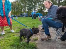 Geen hoofdrol voor Bulldog Nacho bij pakken hoofdprijs op het Rashondenfestival