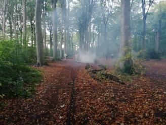 Brandweer bestrijdt brandende boomstronk in Coppietersbos, vermoedelijk veroorzaak door Halloweenhappening