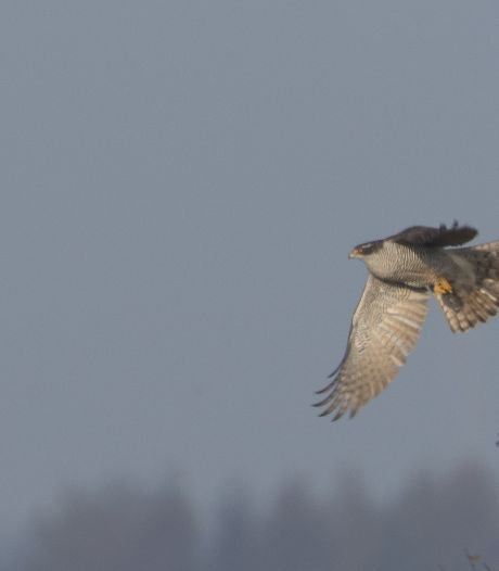 Volksverhuizing komt op gang: miljoenen vogels komen of vertrekken uit Twente