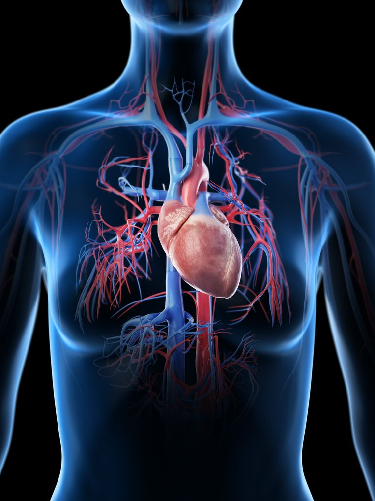 Met de heart-in-a-boxmachine kan het hart weer tot functioneren gebracht worden bij patiënten die overleden zijn.  Beeld Getty Images/Science Photo Libra