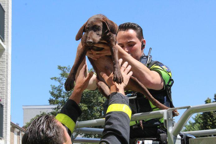 Het hondje dat op een balkon aan de Hooilaan in Breda zat opgesloten wordt uit zijn ellende verlost door de brandweer.