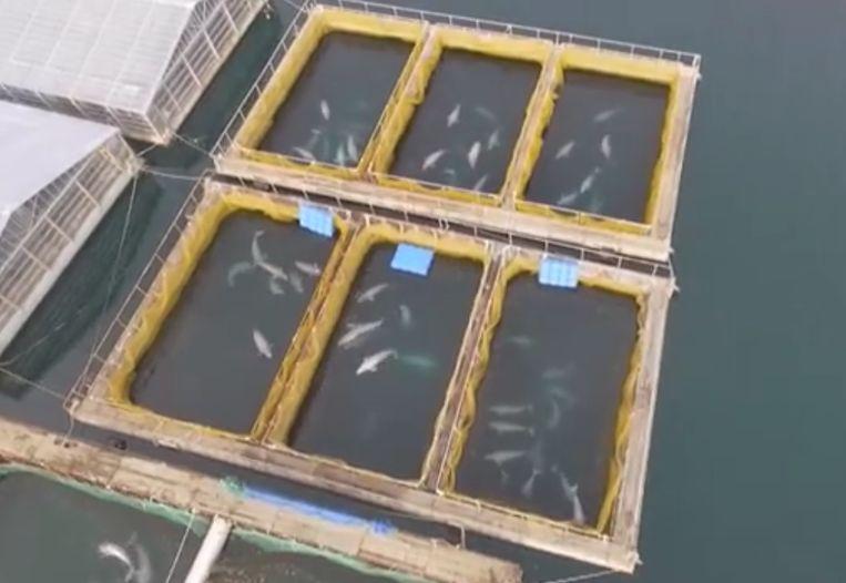 De kooien liggen verborgen in een baai in het oosten van Rusland