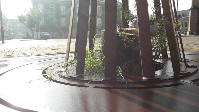 De bomen sterven af door teveel water.