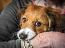 Schreeuwende man schopt 'liefste oma ooit' én haar hondje. Die vloog een 'halve meter' door de lucht