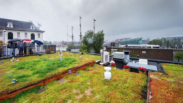 Op het proefdak op het Marineterrein zijn drie types groen dak aangelegd om ze goed met elkaar te kunnen vergelijken. Het blauw-groene dak is het meest linkse deel Beeld Jean-Pierre Jans