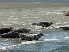 Biologen slaan alarm: vis raakt op in de Oosterschelde
