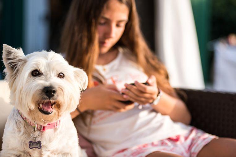 Dit is niet het hondje, noch het meisje uit het TikTok-filmpje. Beeld Getty Images/Cultura RF