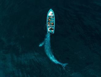 Twee Australiërs verpletterd door walvis