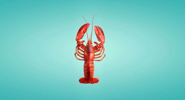 Het verbod op de verkoop van levende kreeften, krabben en bont is genomen met het oog op het dierenwelzijn. Beeld Getty Images