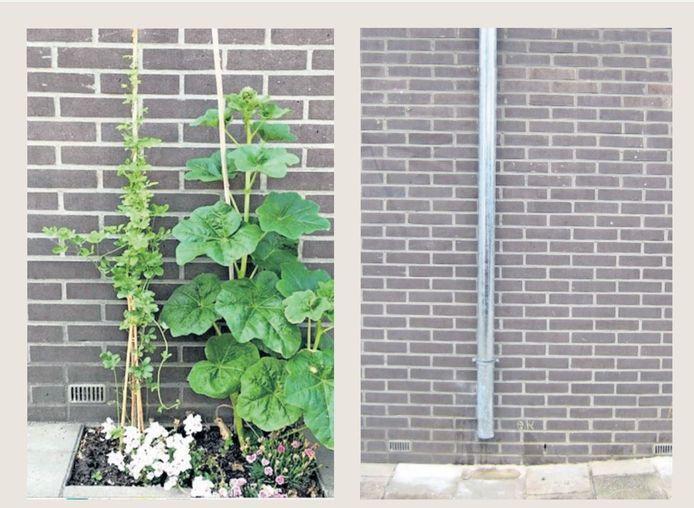 Het geveltuintje aan de Van Diemenstraat in Den Haag dat is weggehaald. De gemeente gaat dit herstellen.