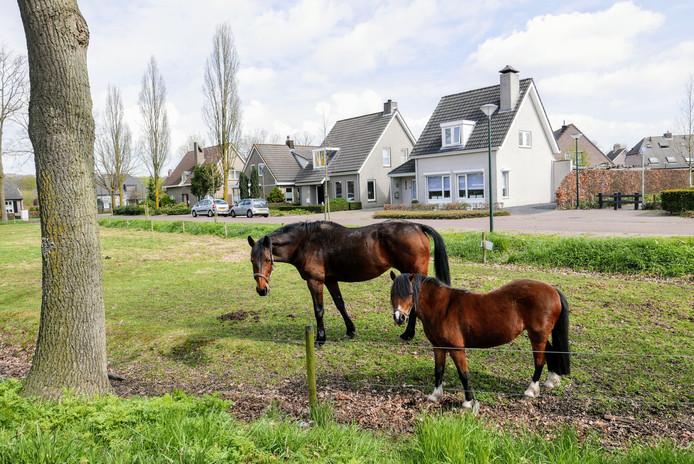 Nieuwbouwwoningen omzomen een paardenweitje midden in het dorp Haaren.