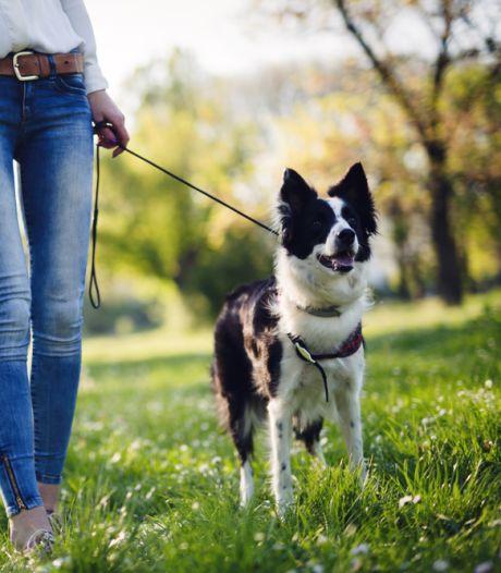 Hondenbezitters krijgen meer ruimte in de Biesbosch