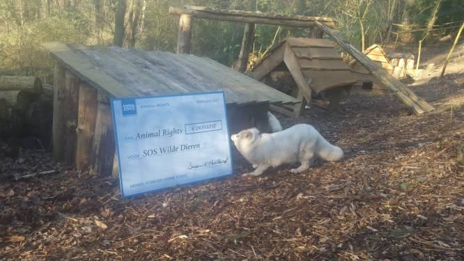Animal Rights schenkt 3.500 euro aan SOS Wilde Dieren voor verzorging poolvossen