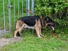 Man (68) neergestoken tijdens uitlaten hond in Heukelom