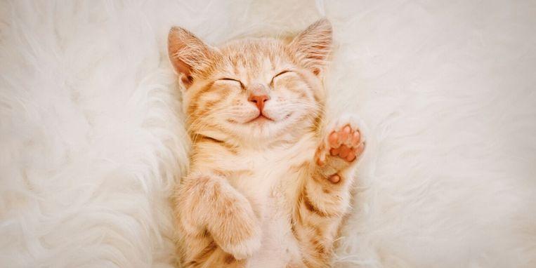 kattennamen.jpg
