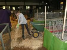 Praktijkschool Elde helpt tentoonstelling kleindieren ESKV