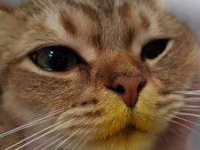 Stuifmeel lelies dodelijk voor katten; 'Bloemisten moeten hun klanten standaard waarschuwen'