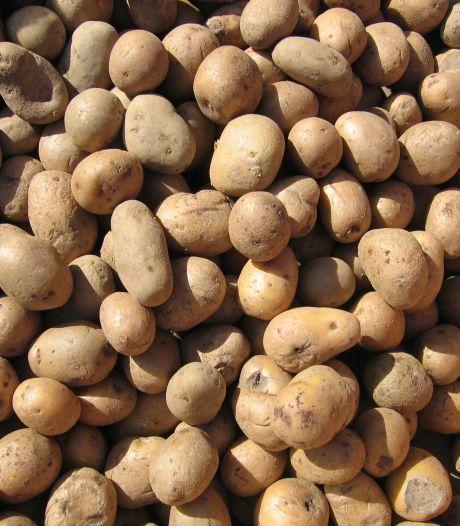 Aardappelhandelaar Kouters wil tijdens oogstperiode vaker rijden