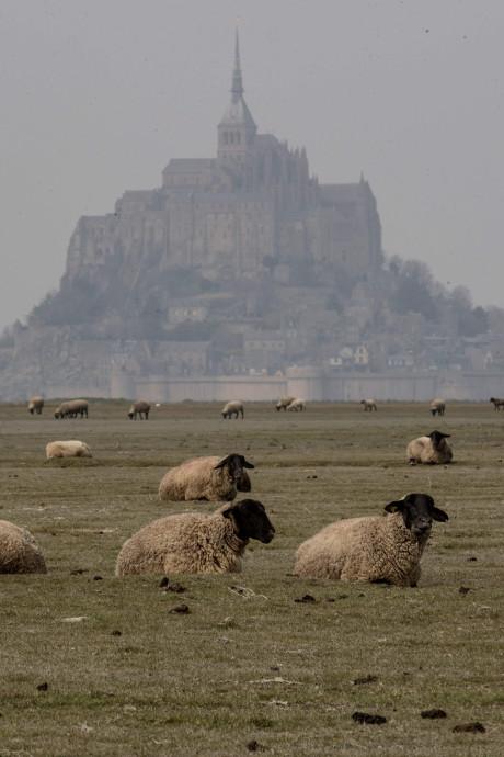 """200.000 candidats répondent à l'appel de la France pour """"rejoindre la grande armée de l'agriculture"""""""