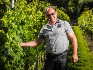 """Marino Moenaert, wijnmaker aan zee: """"Die verrassing bij mijn klanten, daar doe ik het voor"""""""