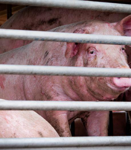 'Moeten dieren niet worden afgeschermd tijdens transport?'