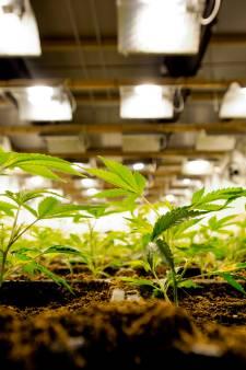 Burgemeester sluit Rockanjese bedrijven na ontdekking hennepkwekerijen