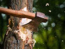 Opnieuw vergunning om 80 bomen in Vlaardingen te kappen