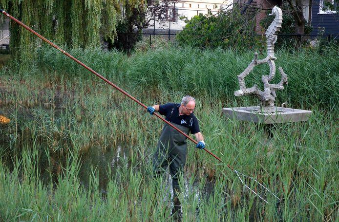 Ad de Blaeij in de vijver naast het stadhuis op zoek naar de grotere vissen.