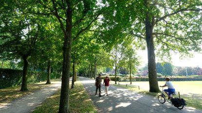 Bomen in Graaf Reussensdreef gaan tegen de vlakte