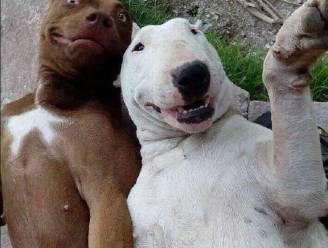Felfies aan de kant, tijd nu voor de animal selfies