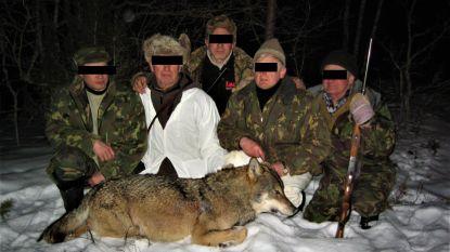 Bedrijf uit Merelbeke onder vuur na georganiseerde wolvenjacht