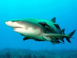 Australiër zwaargewond na aanval door haai