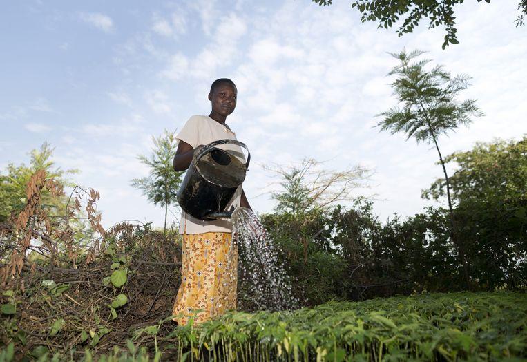 Kleinschalige landbouw in Kenia. Beeld Getty/Thomas Koehler