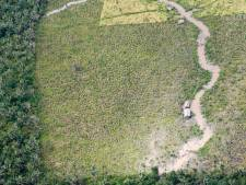 L'Amérique latine va reboiser 20 millions d'hectares