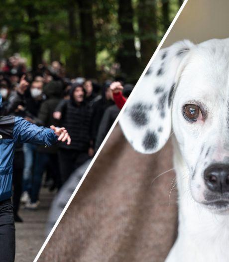 Nieuws gemist? Hondje Paco hield heel wat mensen bezig en drugskoks miljoenenlab veroordeeld tot jaren cel