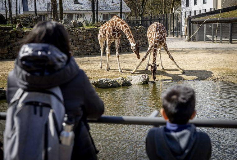 Op een bezoek aan de dierentuin is het nog iets langer wachten. Beeld ANP