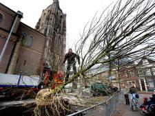 Nieuwe bomen Achter de Kerk, maar wel in verplaatsbare bakken