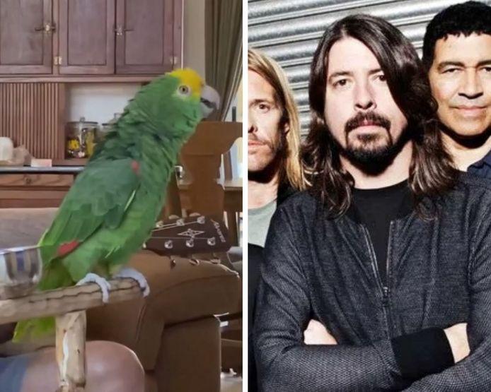 Ce perroquet chante sur un célèbre tube des Foo Fighters.