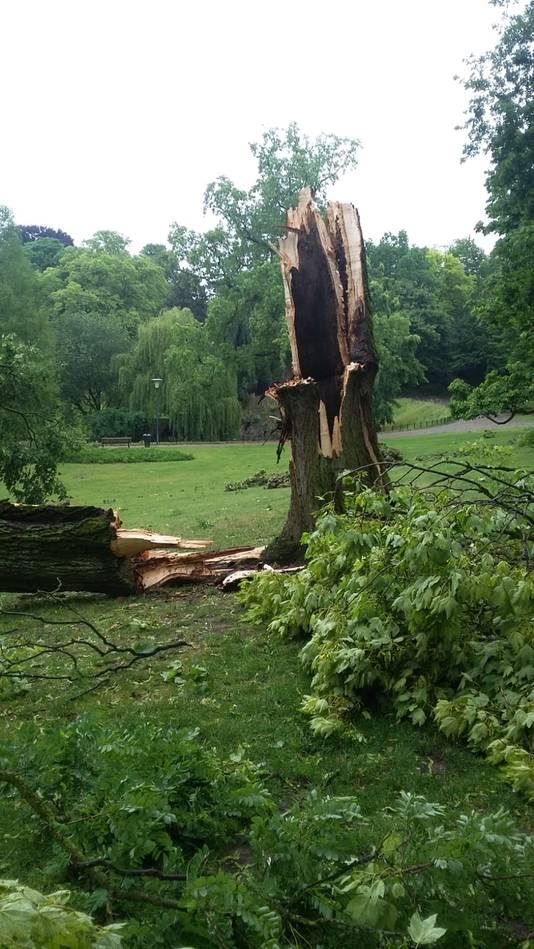 Een gespleten boom in Kronenburgerpark.