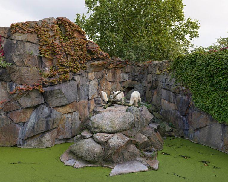 Zoo, Berlijn, Duitsland. Beeld Sheng-Wen Lo