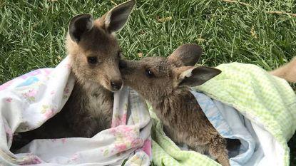 Een week goed nieuws: samen in de bres voor Australië en andere verhalen die je blij maken