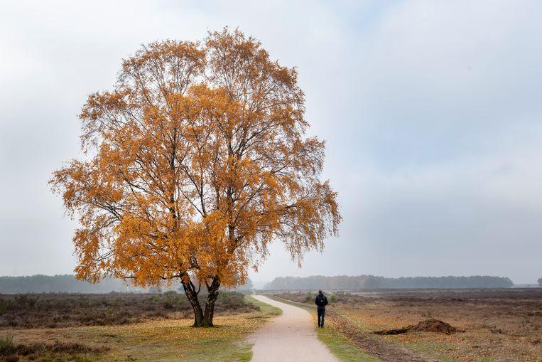 Caspar Janssen heeft het hele jaar gewandeld door Nederland.   Beeld Pauline Niks
