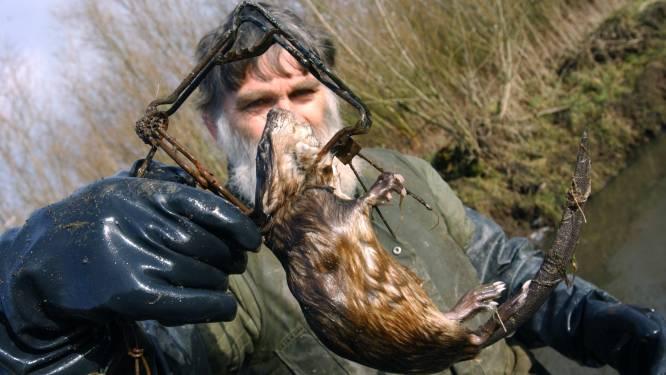 Labrador Pebbel verdronk door rattenval bijna in de rivier, nu komen er waarschuwingsborden
