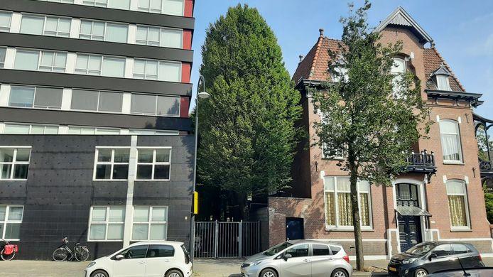 De oude haagbeuken aan de Singel in Dordrecht staan volgens Van Pelt in de weg bij de verbouwing van kantoor tot appartementen en zouden gekapt moeten worden.