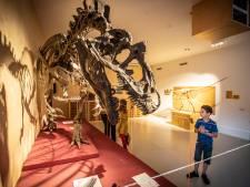 Muziek en dinosaurussen bij Natura Docet in Denekamp