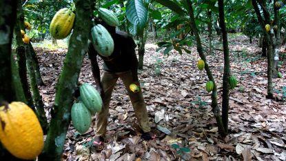 Kinderarbeid op Afrikaanse cacaoplantages neemt toe