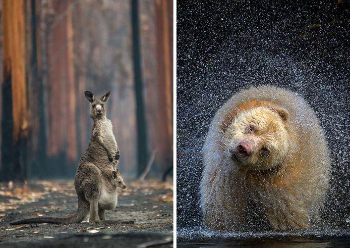 Des clichés du BigPicture Natural World Photography.