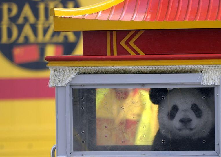 De panda Hao Hao op de luchthaven van Brussel. Beeld reuters