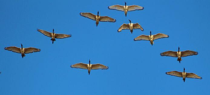 'Ga vliegen met respect voor de Aarde en al wat leeft. Mensen zullen je begrijpen, dankbaar zijn en gelijk ganzen met je mee vliegen.'